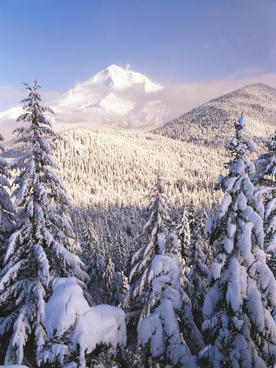 Winter Frost Trees on Mt. Hood, Mt Hood National Forest, Oregon, USA-Stuart Westmorland-Photographic Print
