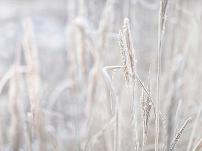 Winter Grass-Lebens Art-Art Print