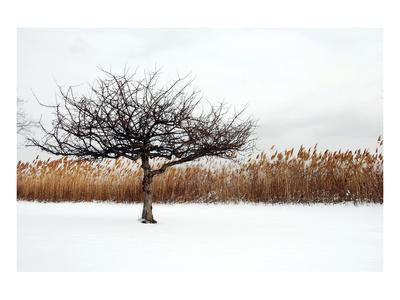 https://imgc.artprintimages.com/img/print/winter-harmony_u-l-f74k2g0.jpg?p=0