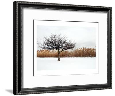 Winter Harmony-Jan Michael Ringlever-Framed Art Print