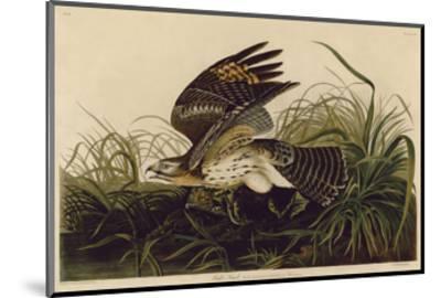 Winter Hawk-John James Audubon-Mounted Art Print