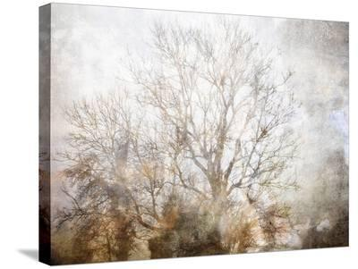 Winter In Champagne-Golie Miamee-Stretched Canvas Print