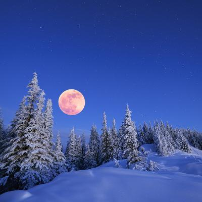 Winter Landscape in the Mountains at Night. A Full Moon and a Starry Sky. Carpathians, Ukraine-Kotenko-Photographic Print