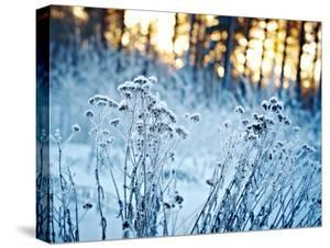 Winter Landscape.Winter Scene .Frozenned Flower
