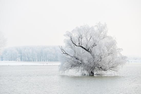 Winter Landscape-geanina bechea-Photographic Print