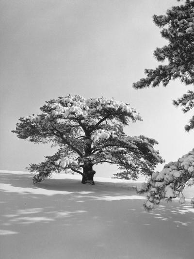 Winter Landscape-George Marks-Photographic Print