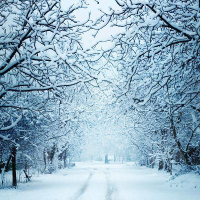 Winter Landscape-Triff-Photographic Print