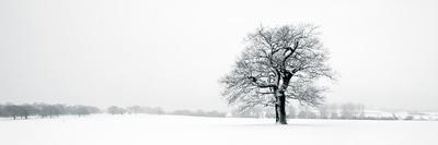 https://imgc.artprintimages.com/img/print/winter-oaks_u-l-f5jqhm0.jpg?p=0
