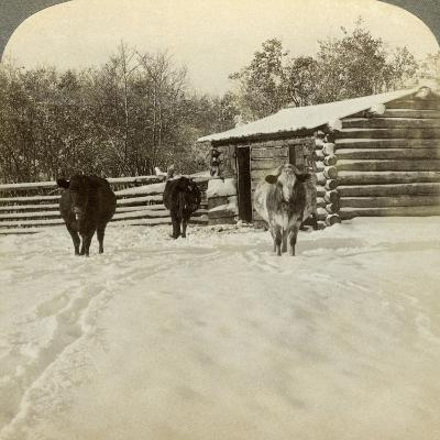 Winter on a Ranch, Montana, Usa-Underwood & Underwood-Photographic Print