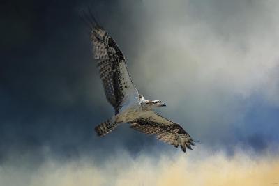 Winter Osprey-Jai Johnson-Giclee Print