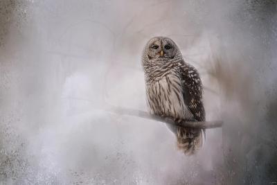 Winter Owl-Jai Johnson-Giclee Print