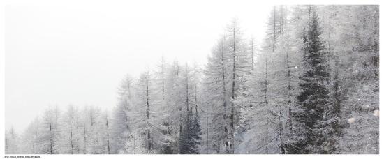 Winter Pines-Mikhaylov-Art Print