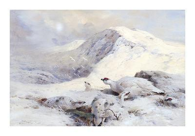 Winter Ptarmigan in a Mountain Landscape-Archibald Thorburn-Premium Giclee Print