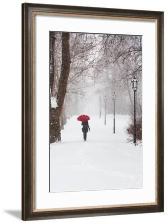 Winter Rose-Stefano Corso-Framed Photographic Print
