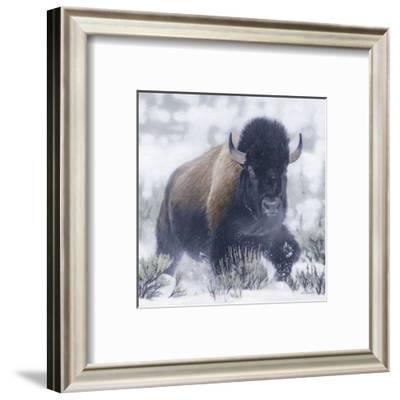 Winter Sage-Terry Isaac-Framed Art Print