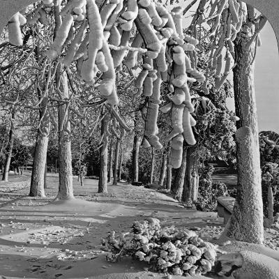 Winter Scene, Goat Island, Niagara Falls, New York, USA--Photographic Print