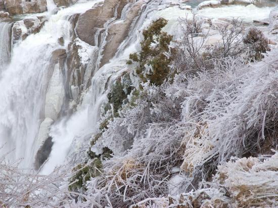 Winter Scene with Ice-Covered Plants in Front of Shoshone Falls-Darlyne A^ Murawski-Photographic Print