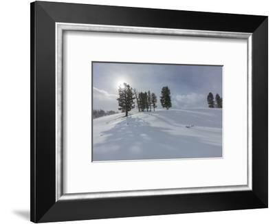 Winter shadows from douglas fir trees in Yellowstone National Park, Wyoming, USA-Chuck Haney-Framed Photographic Print