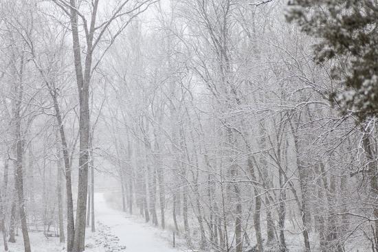 Winter Snowstorm on Manassas National Battlefield Park's Stone Bridge Trail in Virginia-Hannele Lahti-Photographic Print