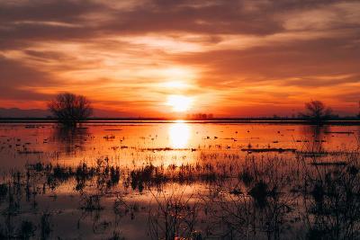 Winter Sunset at Merced Wildlife Refuge, California--Photographic Print