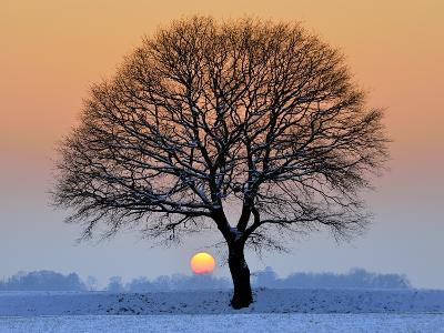 Winter Sunset with Silhouette of Tree-pierre hanquin photographie-Photographic Print