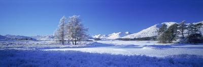 Winter Tree, Rannoch, Scotland, UK-Peter Adams-Photographic Print