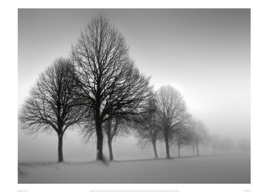 Winter Trees III-Ilona Wellmann-Art Print