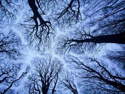 Winter View of Canopy, Jasmund National Park, Island of Ruegen, Germany-Christian Ziegler-Photographic Print