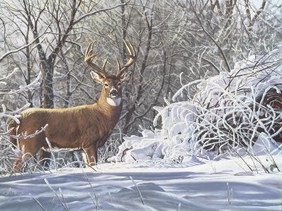 Winter Whitetail-Bruce Miller-Giclee Print