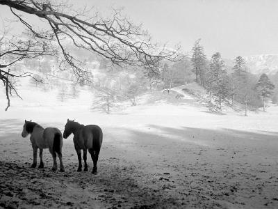 Winter Wonderland: Snow Scene in the Lake District, January 1946--Photographic Print