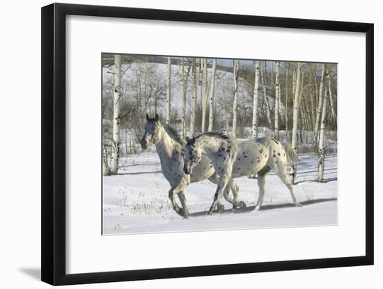 Winter Wonderland-Bob Langrish-Framed Photographic Print