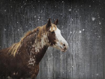 Winters Arrival Horse-Jai Johnson-Giclee Print