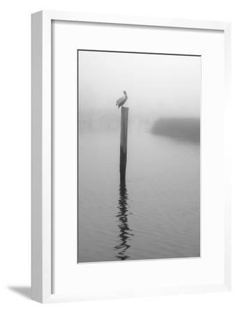 On Pelican Marsh