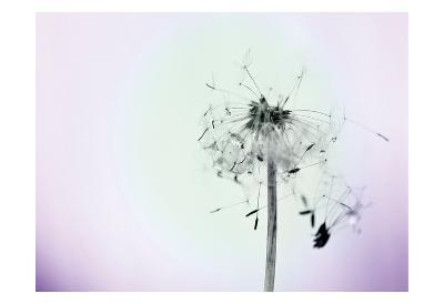 Wishes On A Wind-Tracey Telik-Art Print