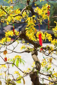 Wishing tree at the Tomb of Emperor Khai Dinh the Last Emperor of Vietnam, Hue, Vietnam