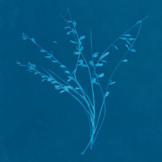 Wisp I-Sarah Cheyne-Giclee Print