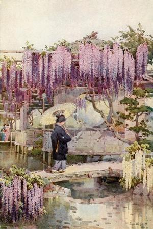 https://imgc.artprintimages.com/img/print/wistaria-kabata_u-l-pp8oiq0.jpg?p=0