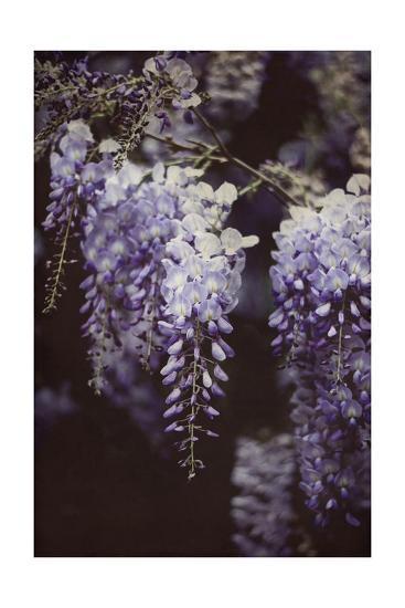 Wisteria Cascade I-Elizabeth Urquhart-Art Print