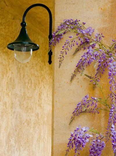 Wisteria Growing at St. Francis Vineyards and Winery, Sonoma Valley, California, USA-Julie Eggers-Photographic Print