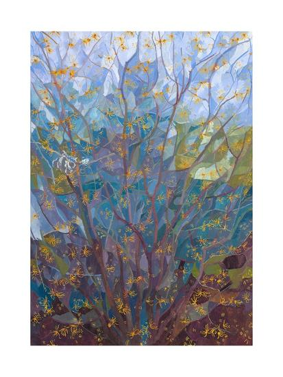 Witch Hazel in Flower, 2015-Leigh Glover-Giclee Print