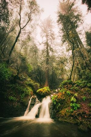 https://imgc.artprintimages.com/img/print/within-beautiful-cataract-falls-marin-county-hiking-california_u-l-q10dlxs0.jpg?p=0