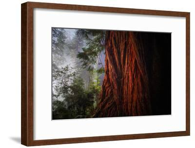 Within The Awesome and Mighty Redwoods, Detail Redwood National Park-Vincent James-Framed Photographic Print