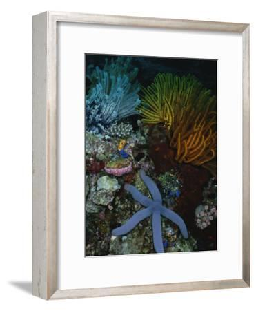 A Blue Starfish with Colorful Coral and Sea Anemones
