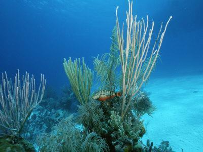 Coral Reef Scene off the Coast of Grand Turk Island
