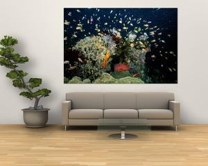 Fish Abound in a Coral Reef off the Coast of Papua New Guinea by Wolcott Henry