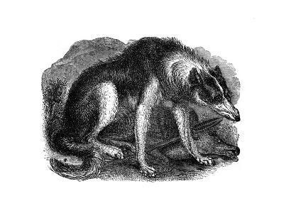 Wolf Dog, 1848--Giclee Print