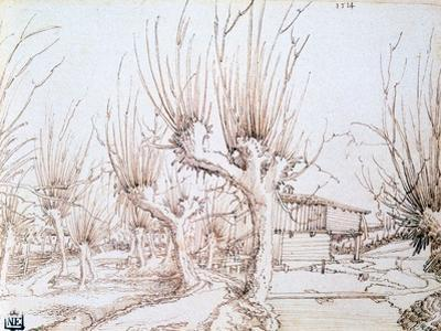 Willow Plantation, 1514