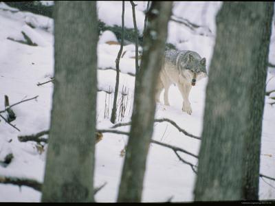 Wolf-Michael Nichols-Photographic Print