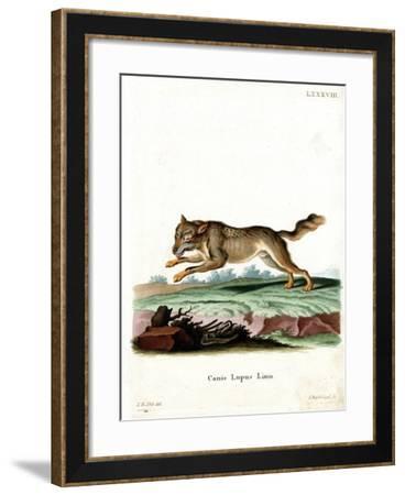 Wolf--Framed Giclee Print