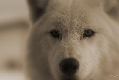 Wolf-Gordon Semmens-Photographic Print
